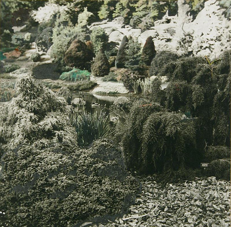 1969, Arboretum