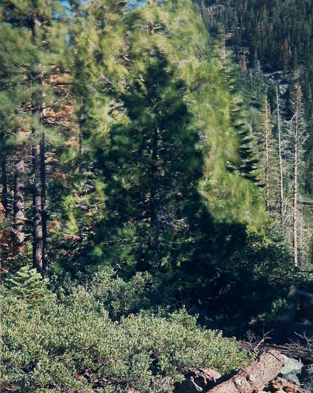 Blowing Trees, Desolation Wilderness