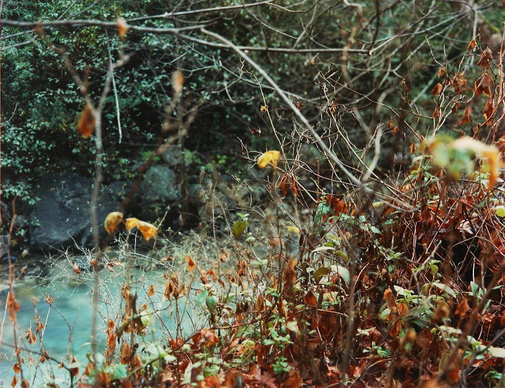 Fall Leaves, Big Sur