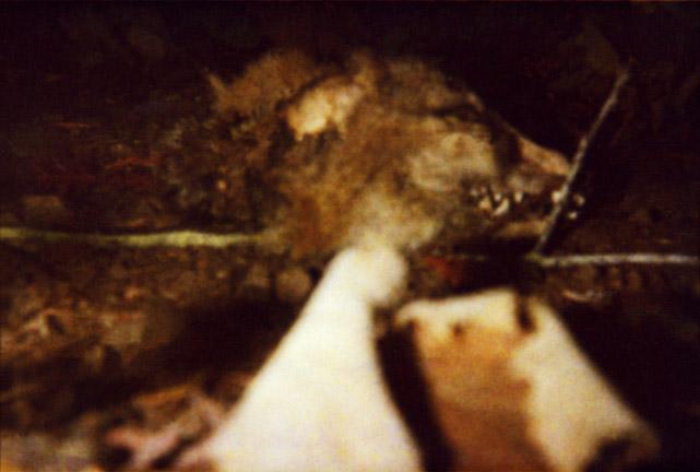 Fox Head on Trail, BS '01