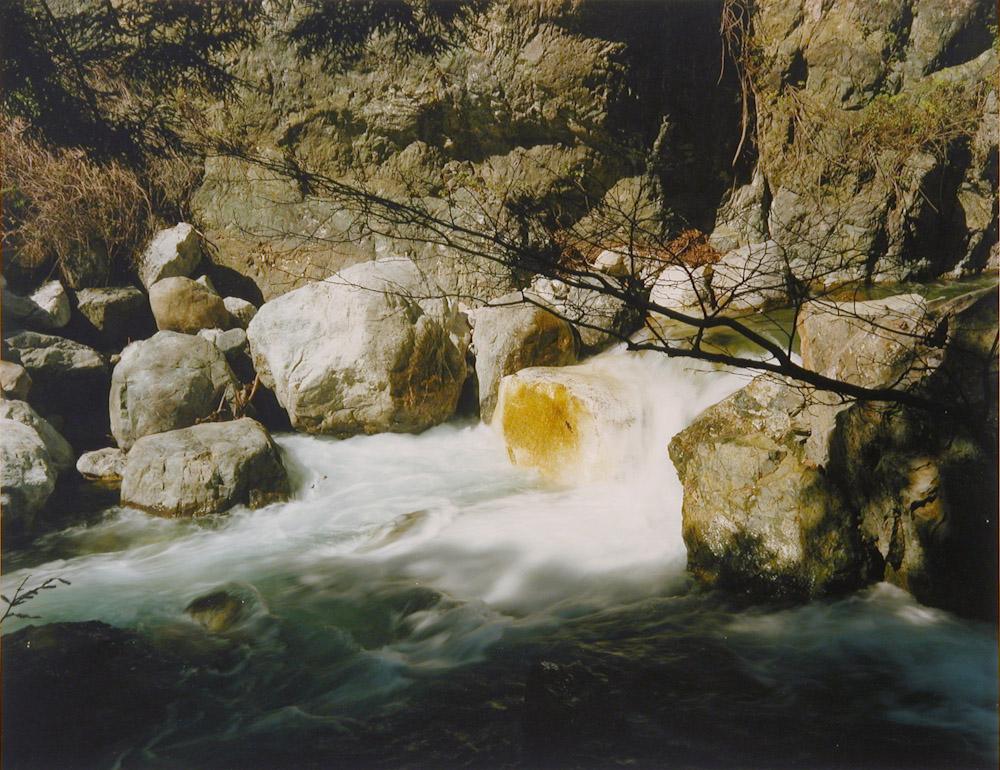 Orange Spanch on Rock, Big Creek
