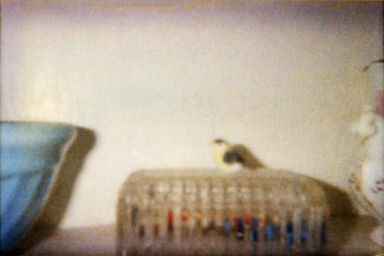 Porcelin Bird On Dish