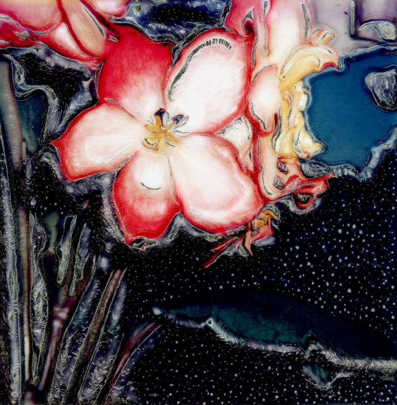 Red Begonia Gordon