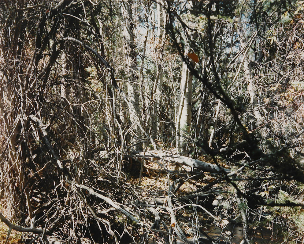 White Branches, Great Basin